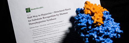 Rare and interesting posttranslational modification - hypusine