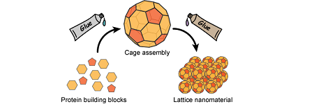 Connecting Nanoscale Protein Cages – Progress Towards New Drug Delivery Systems and Vaccines